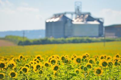 Bioaffald i søgelyset - krav til udsortering, øget genanvendelse, klimamål og bioøkonomi